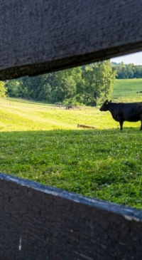 Farmers receive livestock advice from Penn State Extension hotline